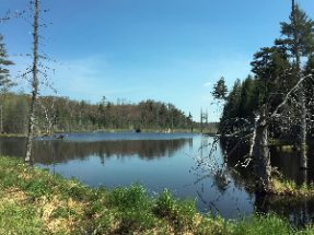 Beaver Pond at Cranberry Lake. Some of the best Hiking in the Adirondacks!